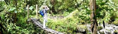 Hiking and Birding tours on the Sendero de Los quetzales Boquete Panama