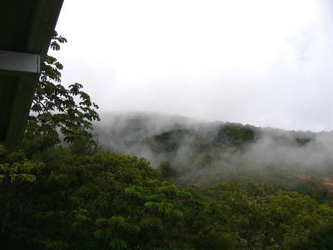 Clouds move in the Forest on the estate, view from the main house